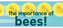 Learning About the Importance of Bees