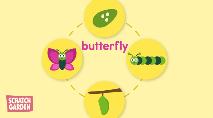 the life cycle of a butterfly explained