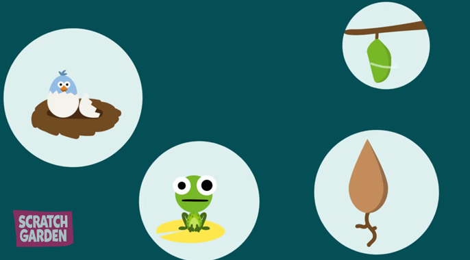 the life cycle of a plant, bird, frog, and butterfly